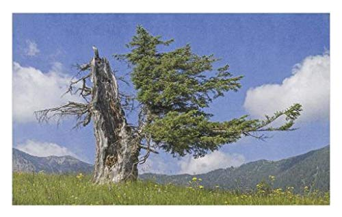(Lunarable Nature Doormat, Old Spruce Tree Coming Back to Life from Death in Summer Meadow Country Image, Decorative Polyester Floor Mat with Non-Skid Backing, 30 W X 18 L Inches, Blue Olive Green)