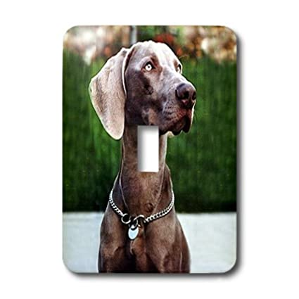 3dRose lsp/_1095/_1 Weimaraner Single Toggle Switch