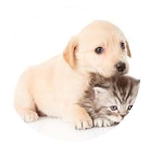 alfombrilla de ratón golden retriever cachorro de perro y gato británico juntos. aislado - ronda - 20cm