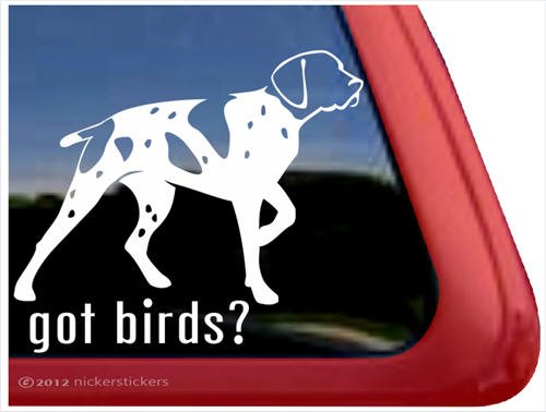 Got Birds? ~ German Shorthaired Pointer Vinyl Window Auto Decal Sticker