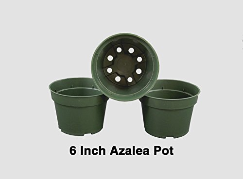 6 inch Azalea Pots Herbs Flowers Peppers Growing Garden - Case of 560 pots by growerssolution'