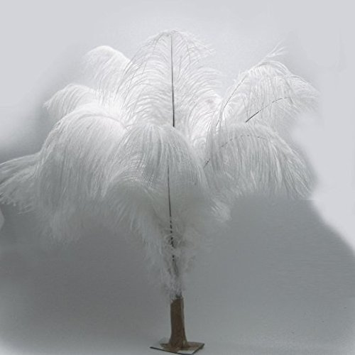 KOLIGHT 100pcs Ostrich Feather White 12''-14'' Natural Feathers Wedding, Party,Home,Hairs Decoration by KOLIGHT (Image #2)