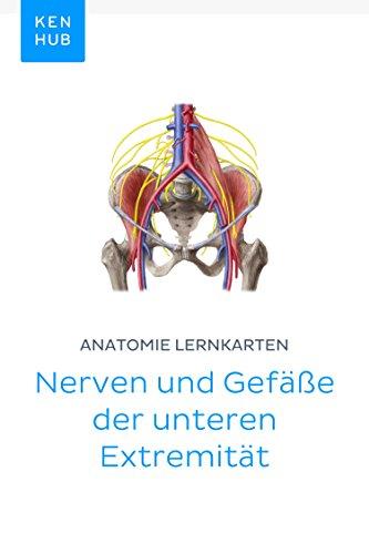 Anatomie Lernkarten: Nerven und Gefäße der unteren Extremität: Lerne ...