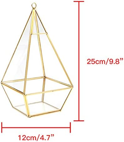 12 x 12 x 25 cm Transparent Pour terrarium D/écoration Pyramide g/éom/étrique Bo/îte /à plantes en verre moderne /à suspendre /à fixer au mur Noir dor/é