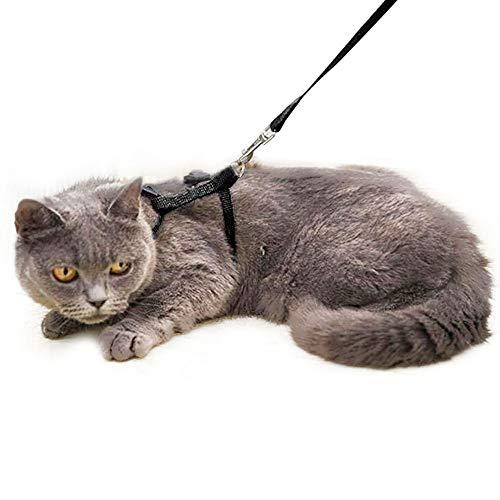 - Cat Harness, Cat Lead Set of Kitten Nylon Lead Little Pet Strap Belt 49.2inch - Soft Adjustable - Best for Kitten Walking (Black)