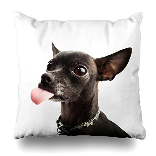 DIYCow Throw Pillow Cover Pillowcase Nature Brown Dog Black Chihuahua Head Closeup Camera Pedigree Cute Funny Adorable Alert Breed Design Home Decor Design Square Size 18