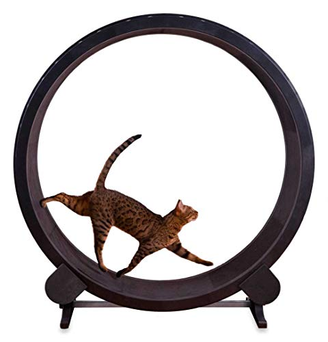 Phasuk Cat Exercise Wheel Indoor Kitty Play Toy Treadmill Training Treadwheel Black New
