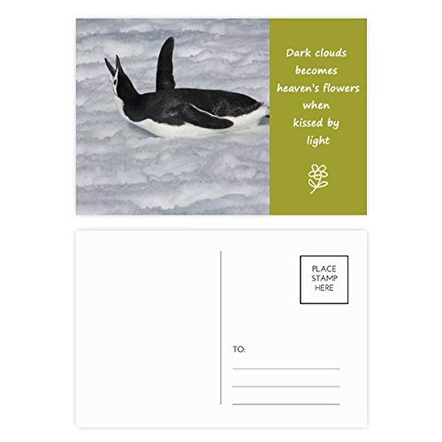 Water Black Antarctic Penguin Picture Poetry Postcard Set Thanks Card Mailing Side 20pcs by DIYthinker
