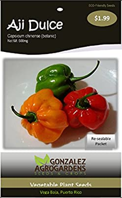 Ajicito, Aji Dulce, Aji Gustoso, Cachucha, Sweet Pepper 100 Seeds