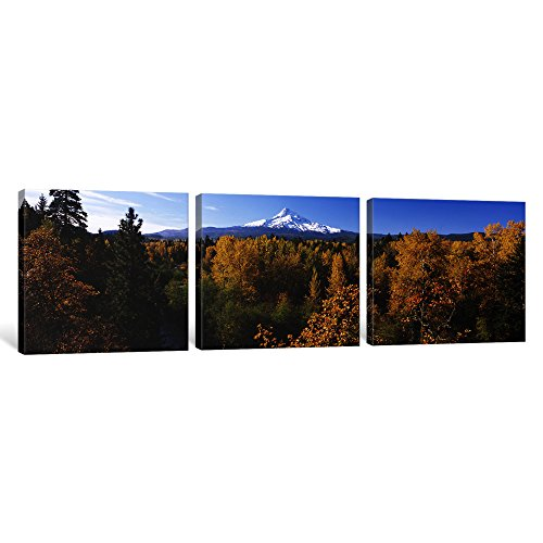 iCanvasART 3 Piece Cottonwood Trees in a Forest, Mt Hood, Hood River, Mt. Hood National Forest, Oregon, USA Canvas Print by Panoramic Images, 36 x 12/0.75