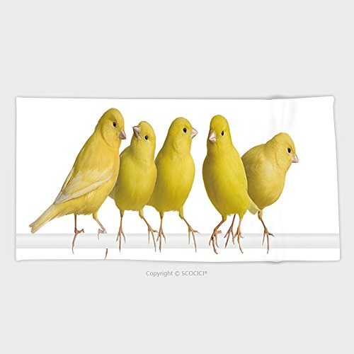 27.5W x 11.8L Inches Custom Cotton Microfiber Ultra Soft Hand Towel Flock Of Yellow Canary Serinus Canaria On Its Perch In Front Of A White Background 16092436