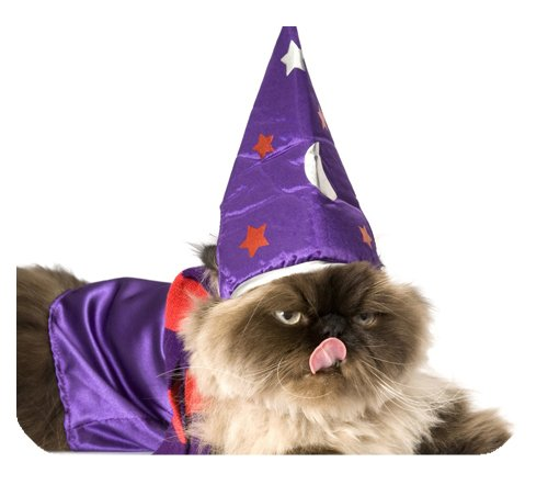 Cat in Halloween Costume Wizzard Art Customized Durable