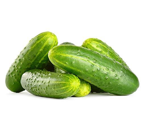 David's Garden Seeds Cucumber Pickling Jackson Supreme SL8346 (Green) 25 Non-GMO, Hybrid -