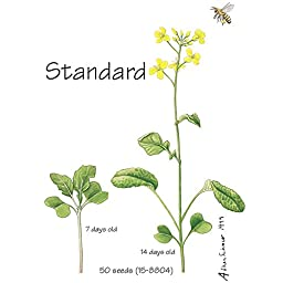 Brassica rapa Wisconsin Fast Plants, Standard Seed, Pack of 200