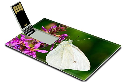 Luxlady 32GB USB Flash Drive 2.0 Memory Stick Credit Card Size Beautiful Cabbage white butterfly feeds the nectar of the purple flower IMAGE - Card Deals Nectar