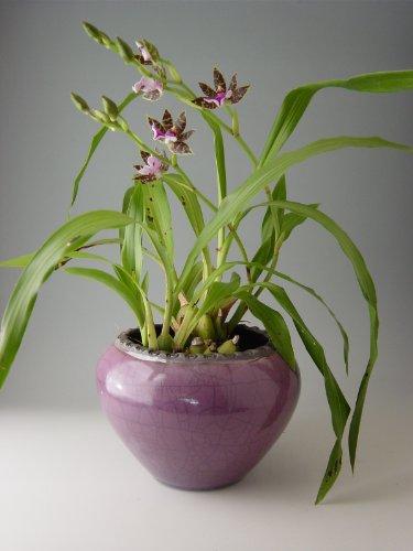 Ceramic Cachepot - 6