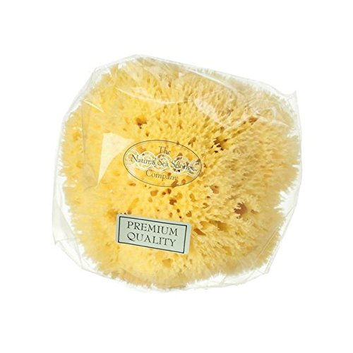 Hydrea London Honeycomb Sea Sponge (PACK OF 4) by Hydrea London