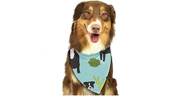 Beauty-Design Pañuelo para Perro con diseño de Cactus y ...