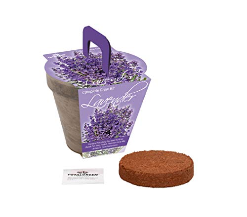 TotalGreen Holland Grow Fresh Lavender Seeds in basalt pot Indoor   Great Gift Item   Grow Your Own Lavender From Seed   Non-GMO Lavender Starter Kit With Easy Instructions   Exclusive Germination Kit by TotalGreen Holland (Image #1)