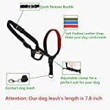 wintchuk Dog Head Collar with Padded