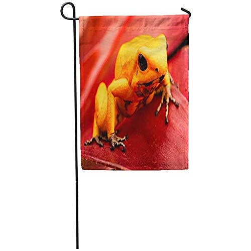 Staroutah Garden Flag 12x18 Inches Print On Two Side Polyester Poison Dart Frog Phyllobates Terribilis Deadly Animal from The Tropical Amazon Home Yard Farm Fade Resistant Outdoor House Decor Flag