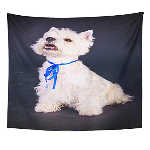 Semtomn Tapestry Canine Animal West Highland White Terrier Over Black Breed Home Decor Wall Hanging for Living Room Bedroom Dorm 60x80 Inches