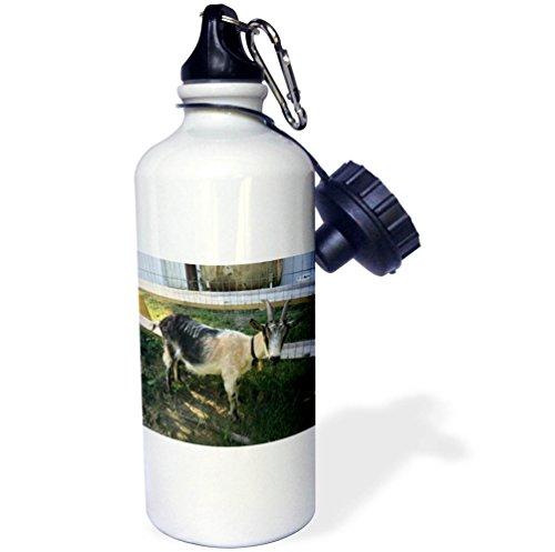 Price comparison product image 3dRose BrooklynMeme Farm Animals - Goat white and black - 21 oz Sports Water Bottle (wb_256636_1)