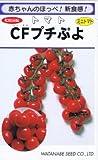 渡辺採種場 トマト CFプチぷよ コート種子約10粒