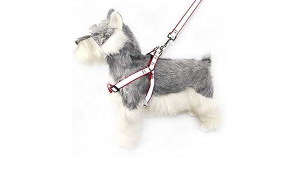 GBX Salga a dar un paseo y entrene Correa para mascotas: Correa ...