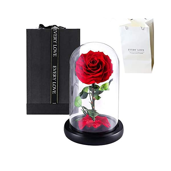 Le-Home Forever Real Rose, Everlasting Flower Preserved Fresh Flower Live Enchanted Rose in Glass Dome Cover with Gift Box Bag for Valentines Day Mothers Day Anniversary Birthday Wedding (Red)
