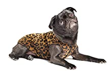 Gold Paw Stretch Fleece Dog Coat – Soft, Warm Dog Clothes, Stretchy Pet Sweater – Machine Washable, Eco Friendly – All Season – Sizes 2-33, Leopard, Size 10