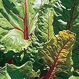 Organic Rhubarb Chard - 100 Seeds - Veggie