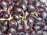 Pack of 1, 25 Lbs. Fragrance Oil Concord Grape Scent