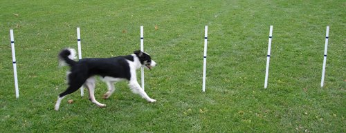 Affordable Agility Stick in the Ground 6 Pole Weave Set by Affordable Agility