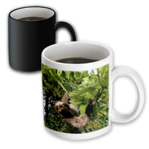 3dRose Panama, Panama City, Three-Toed Sloth Wildlife, Magic Transforming Mug, - Outlets Panama In