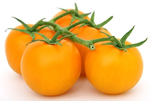 (Organic Golden Jubilee Tomato Seeds - Large Tomato - One of The Most Delicious Tomatoes for Home Growing, Non GMO -)