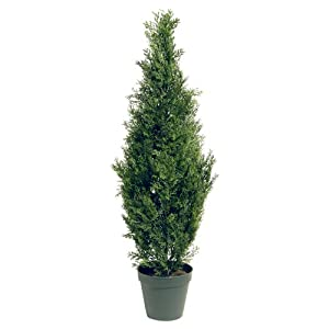 National Tree Arborvitae Tree with Dark Green Round Plastic Pot 110