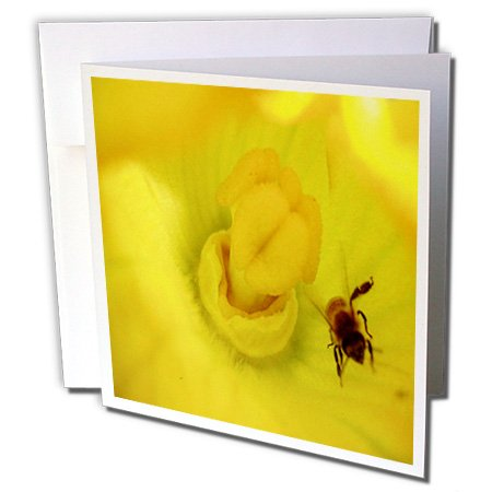 Sandy Mertens Flower Designs - Zucchini Flower With Bee - 6 Greeting Cards with envelopes (gc_6272_1)