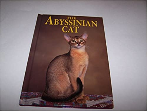 Abyssinian Cat Uk
