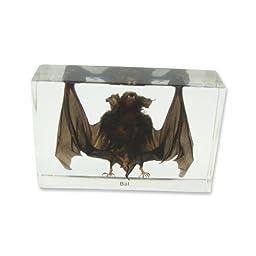REALBUG Bat Specimen