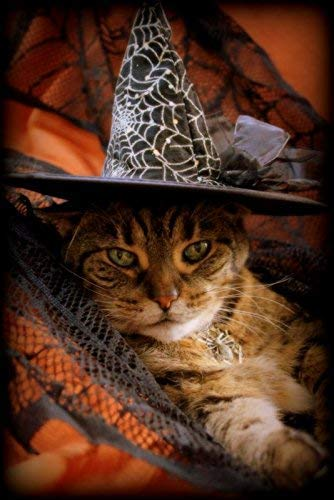 Funny Cat Halloween greeting cards/party invitations (set of 5)]()