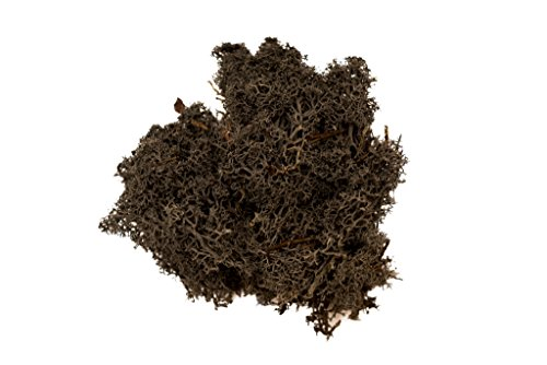 Hinterland Trading Deep Smoke Soft Reindeer Moss for Decoration, 3-Ounce, Black (Pebble Smoke)