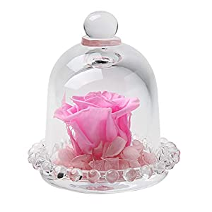 nightfall Beauty and The Beast Rose, Enchanted Red Silk Flower with LED Glass Dome for Valentine's Day Mother's Day Christmas 57