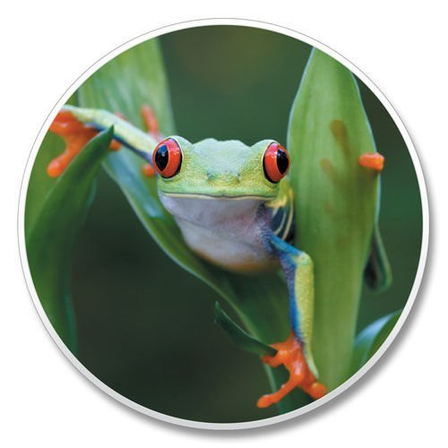 Frog Auto Coaster, Single Coaster for Your Car ()