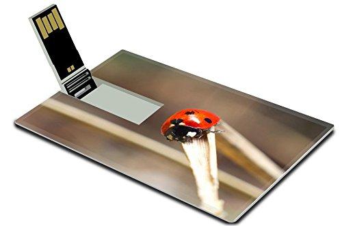 256GB Cartoon ladybug USB Flash Drive - 2