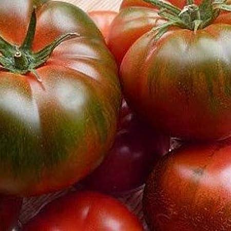 Tomate Muchamiel 25 x semillas de Portugal 100% natural cría/absoluta Rarität/Masenträger ideal para ensalada y aperitivos (Amazon-Produktseite anzeigen)