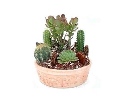 Superbe Cactus Garden Small | Green Gift That Ships Via 2 Day Air!