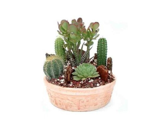 (Cactus Garden Small | Green Gift that Ships Via 2-Day Air!)