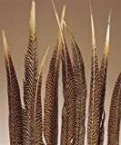 Femitu Golden Pheasant Feathers Natural 20 To 22inch