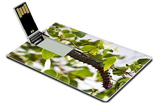 luxlady-32gb-usb-flash-drive-20-memory-stick-credit-card-size-mopane-worm-on-leaf-colourful-eat-hang